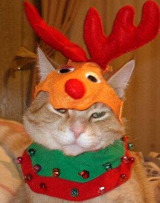 An orange cat named Zippy