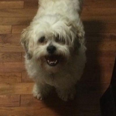 A fluffy white dog named Geddy