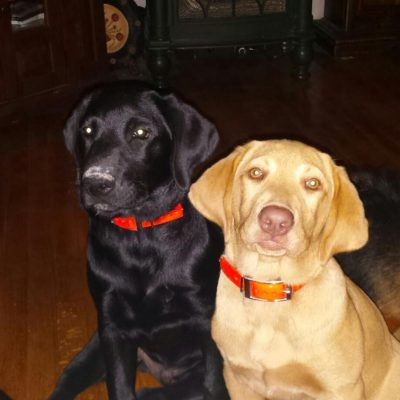 Two Lab's, one is black and one is yellow. They are named Boomer and Delilah