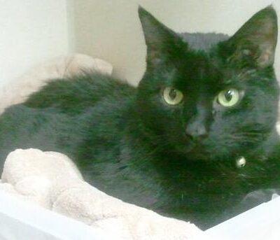 A black cat named Reuben