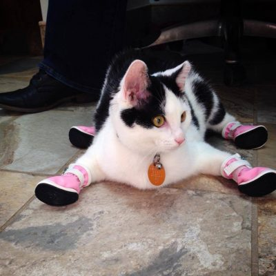 A black and white cat wearing pink boots named Batman